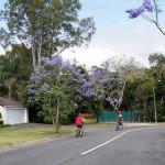 Alla scoperta del Queensland: la grande barriera corallina e non solo